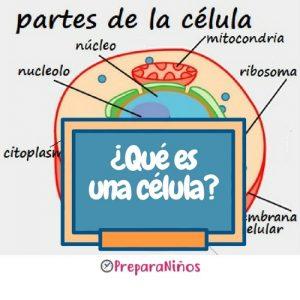 ¿Qué es una célula?
