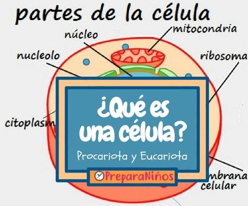 Qué es una célula explicado para niños de primaria
