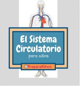 El sistema circulatorio para niños de primaria