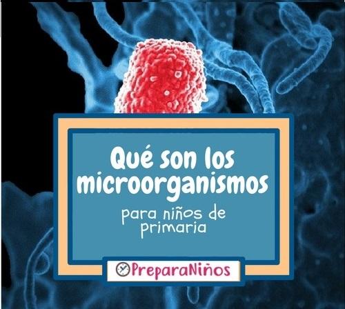 Qué son los microorganismos: Resúmen para niños