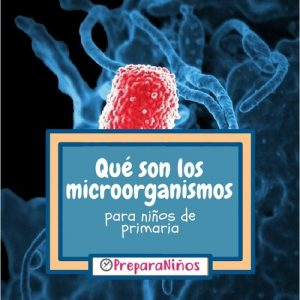 Los microorganismos explicación para niños