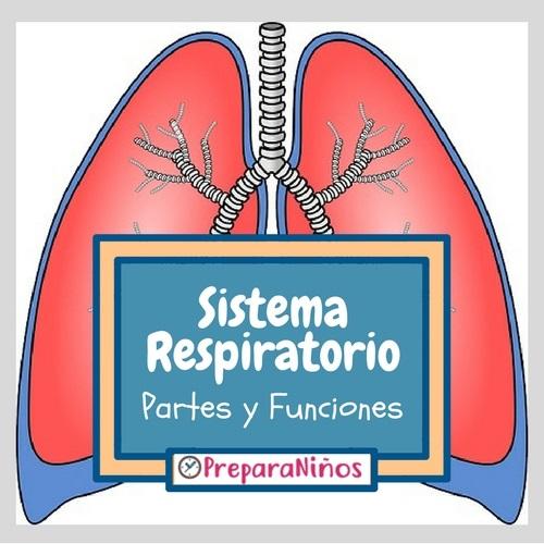 Sistema Respiratorio para Niños de Nivel Inicial