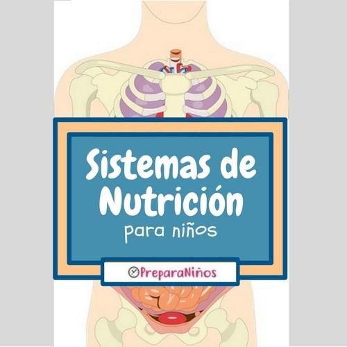 Sistemas de Nutrición para Niños de Primaria