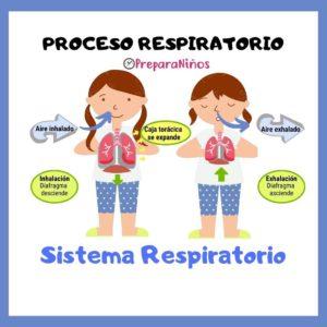 Proceso Respiratorio Explicación para Niños