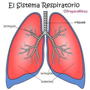 Sistema Respiratorio para Niños: Partes y Funciones