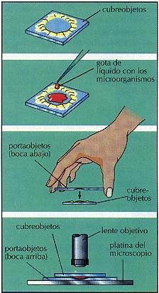 Qué es el Microscopio explicación para niños: Muestra