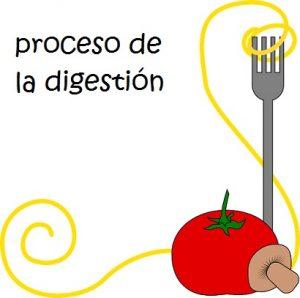 El Proceso de la digestión: Explicación para niños