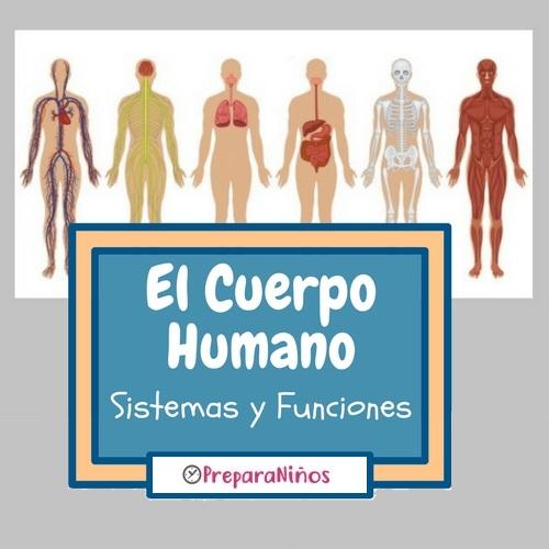 El Cuerpo humano para niños: Sistemas y Funciones