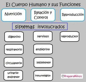 El cuerpo humano como sistema