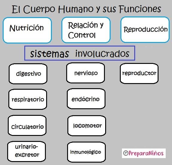 El cuerpo humano y sus Funciones