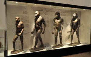 Homo Habilis Evolucion del Hombre