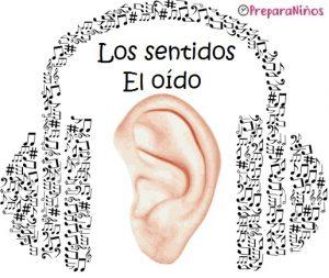 El Sentido del Oído y sus Partes