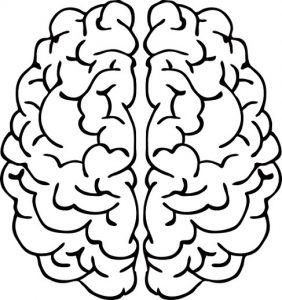 Sistema Nervioso: El Cerebro para Niños para colorear