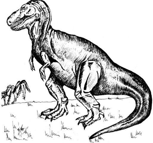 Dinosaurios Para Ninos Colorear Preparaniñoscom