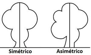 Simetrico y Asimetrico