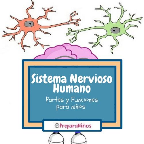 Sistema Nervioso Humano para Niños