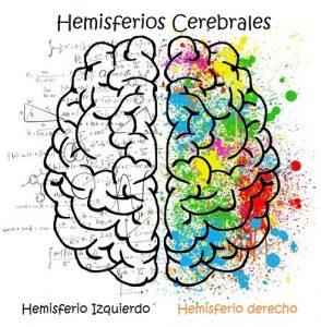 Los hemisferios cerebrales: El sistema nervioso humano para niños de primaria