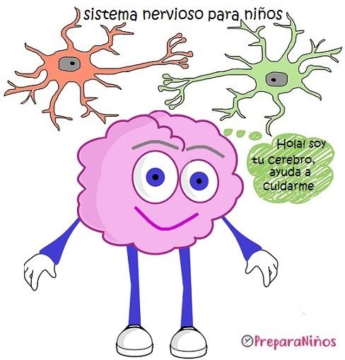El Cerebro y Sistema nervioso para niños - PreparaNiños.com