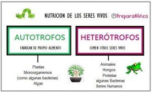 Diferenciaentre Autótrofo y heterótrofo