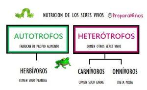 Diferencia entre Autótrofos y Heterótrofos: Ejemplos