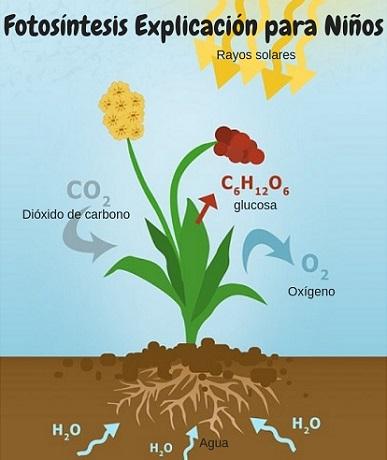 Las plantas elaboran su propio alimento
