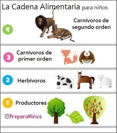 Alimentación De Los Animales Carnívoros Herbívoros Omnívoros Para