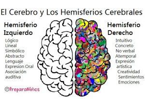 Qué es el Cerebro para niños: Hemisferios Cerebrales