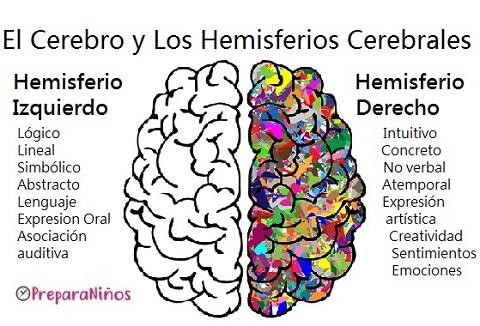 Hemisferios cerebrales explicación para niños