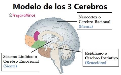 El cerebro Triuno ¿Cuántos cerebros hay?