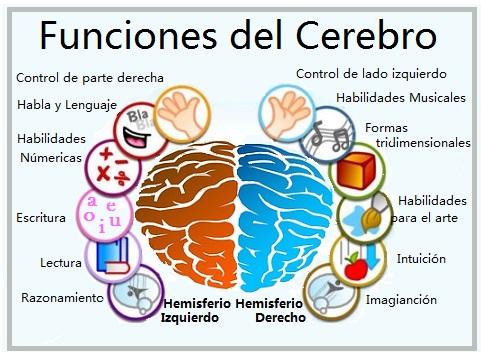 Las Funciones del Cerebro