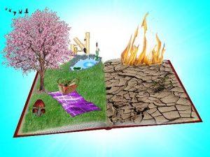 Contaminantes del Suelo: Tala de Arboles