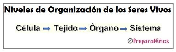 Niveles de Organización en los Seres Vivos