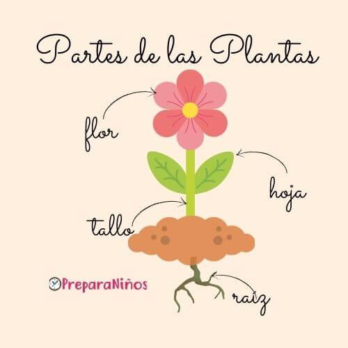 Las Partes de las Plantas para Niños de Inicial