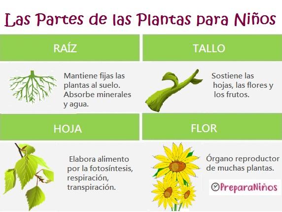 Cuáles son las Partes de una Planta y sus Funciones