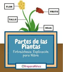 Las Partes de las Plantas y Fotosíntesis para Niños