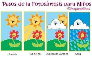 Elementos de la fotosíntesis para niños