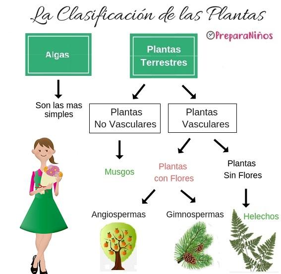 Clasificación de las Plantas vasculares y no vasculares