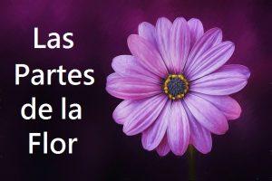 Las Partes de la Flor: Explicación para Niños de primaria