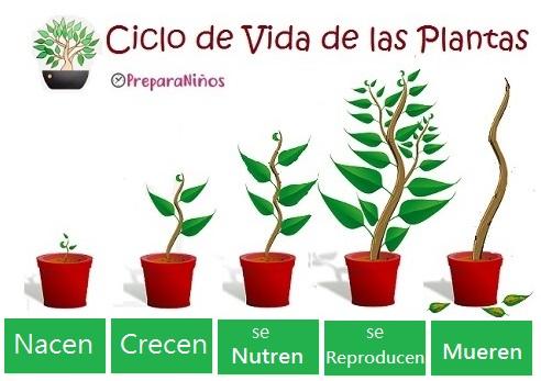 Las Plantas: Funciones Vitales