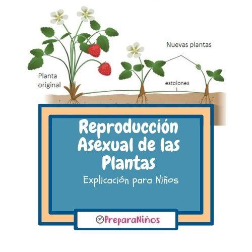 Reproducción Asexual en plantas para niños