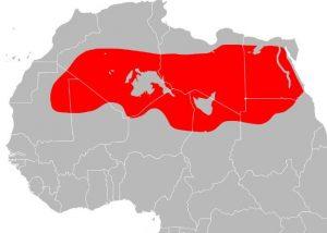 Donde Esta El Desierto Del Sahara