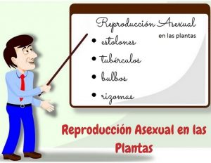 Reproducción Asexual Vegetativa estolones, tubérculos, bulbos y rizomas para niños de primaria