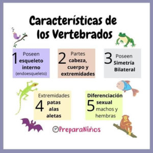 Vertebrados: Características para Niños