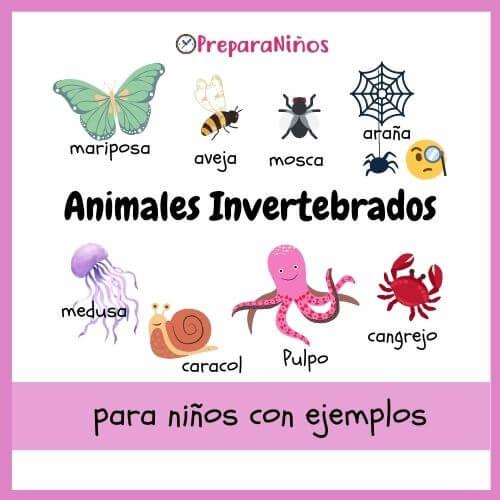Animales invertebrados para niños