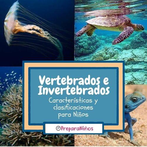 Animales Vertebrados e invertebrados para Niños de primaria