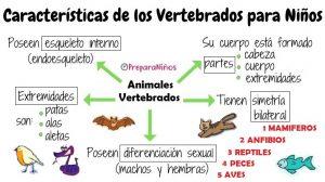 Animales vertebrados y sus Características para niños de primaria
