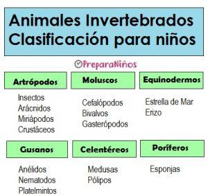 Animales Invertebrados para Niños de Primaria