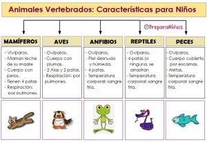 Características de los Animales Vertebrados para niños